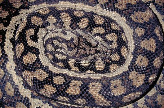 Karl H Switak - Inland Carpet Python