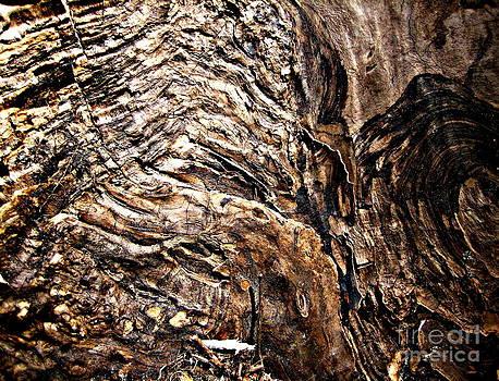 Inner Spirit of a Tree by Alex Blaha