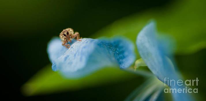 Venura Herath - Insect