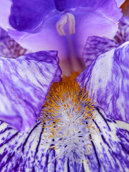 Inside Iris by Heather Sylvia