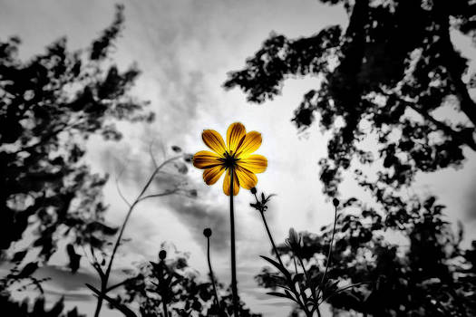 Inspire by Suradej Chuephanich