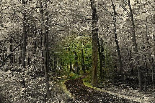 Rosanne Jordan - Into the Forest