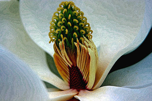 Into the heart of the magnolia drybrush by Andy Lawless