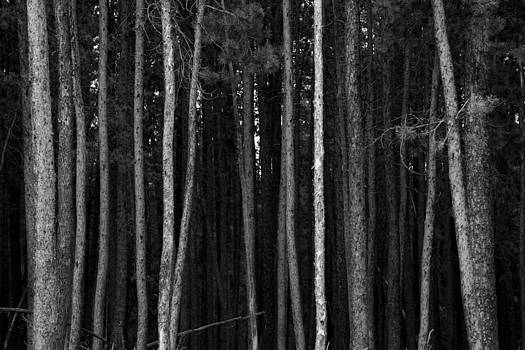 James BO  Insogna - Into The Pine Tree Forest Shadows
