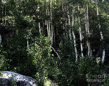 Bedros Awak - Into The Woods