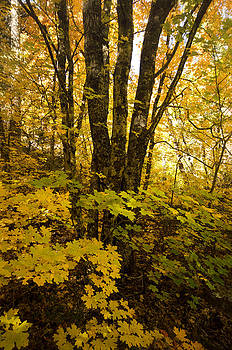 Saija  Lehtonen - Into the Woods