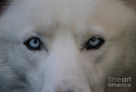 Into Your Soul by Michelle Nixon