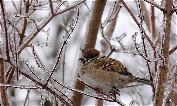 Inverno by Halina Nechyporuk