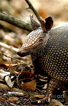 Nine Banded Armadillo by Robert Frederick