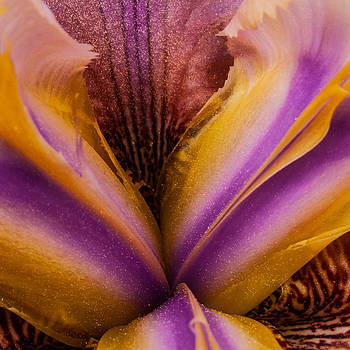 Iris and Gold Dust by Larry Goss