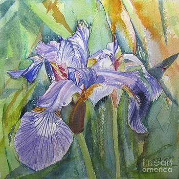 Iris by Carol Flagg