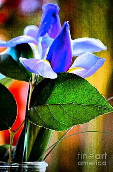 Gwyn Newcombe - Iris Carried Away