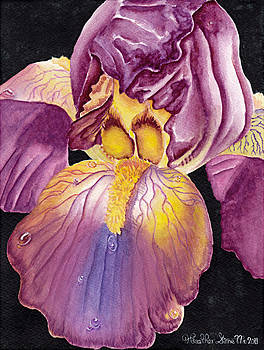 Iris Portrait by Heather Stinnett