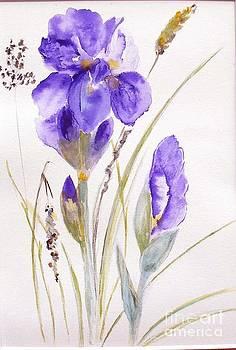 Iris by Sibby S