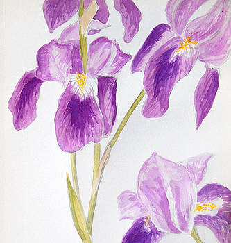 Iris Study by Katharine Green