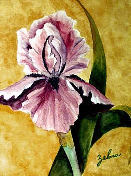 Iris by Zelma Hensel