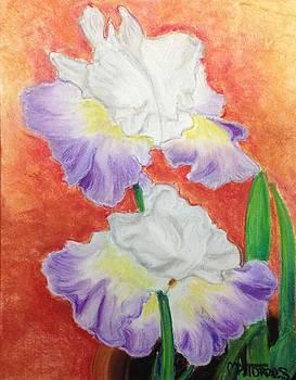 Irises by Melissa Torres