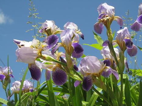 Alfred Ng - irises under blue sky