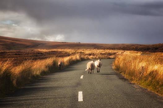 Irish Landscape by India Blue photos