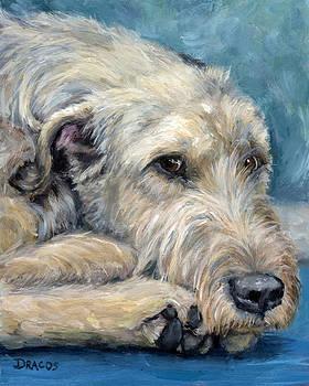 Irish Wolfhound Lying by Dottie Dracos
