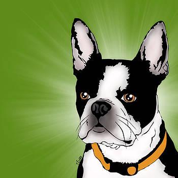 Isla the Boston Terrier by Tony Clark