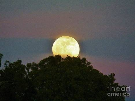 Judy Via-Wolff - Island Moon 2
