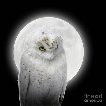 Isolated White Owl in Night with Moon by Angela Waye