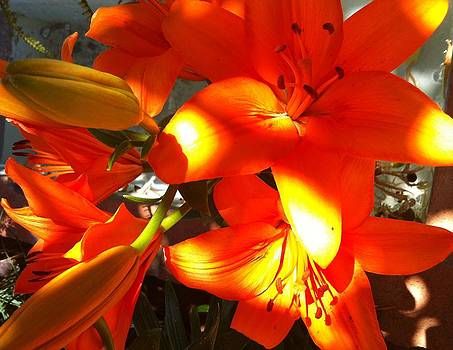 It's a Beautiful Day Lily by Stephanie Aarons