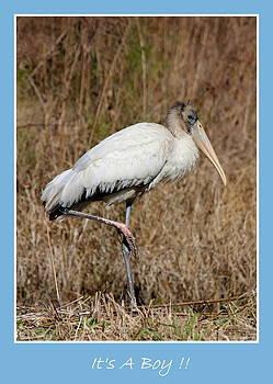 Rosanne Jordan - Its A Boy Stork