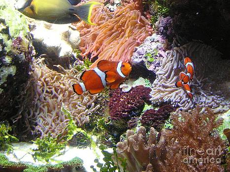 It's Nemo by Crystal Miller