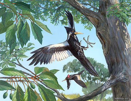 Ivory-billed Woodpecker by ACE Coinage painting by Michael Rothman