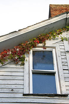 Ivy on Old School House by Sarah Yost