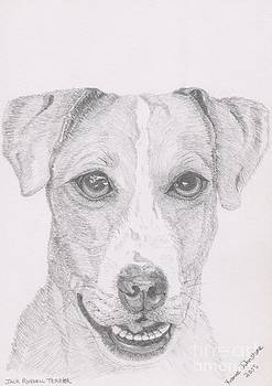 Jack Russell Terrier by Yvonne Johnstone