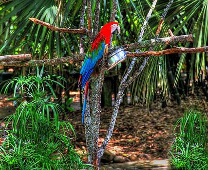 Jacksonville Parrot by Sharon Batdorf