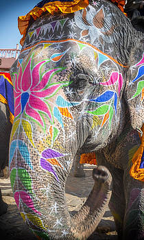 Jaipur Elephant by Peter Aitchison