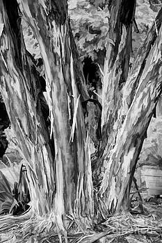 Dan Carmichael - Japanese Crape Myrtle Tree BW