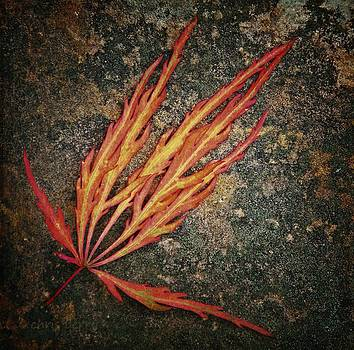 Japanese Maple Leaf on Stone by Chris Berry