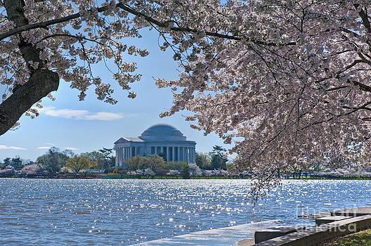 David  Zanzinger - Jefferson Monument Spring Tidal Basin Sakura Washington DC