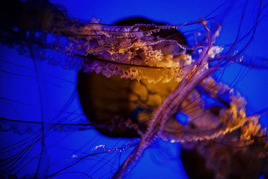 Jelly four by SFPhotoStore