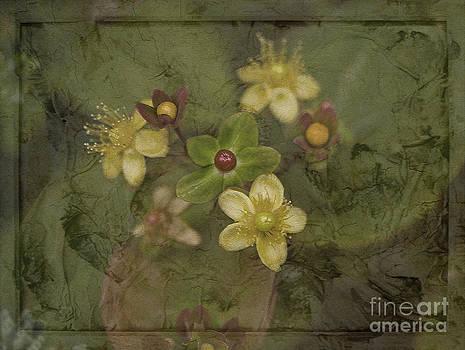 Liz  Alderdice - Jewels in Green Velvet