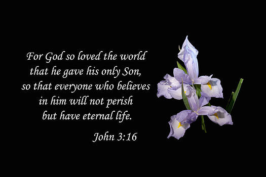John 3 16 by Inspirational  Designs