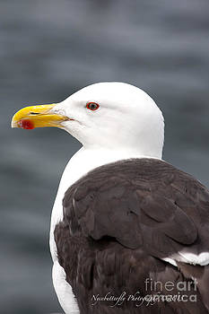 Jonathan Livingston Seagull I Presume by Kimberly Nyce