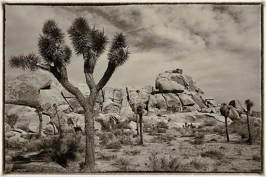Joshua Tree by Eugene Dailey