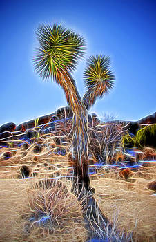 Joshua Tree Glow by Chris Brannen
