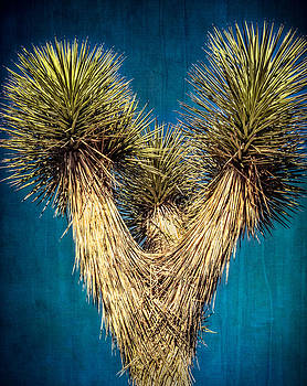 Joshua Tree Three by Janice Sullivan