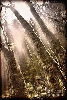 Landscape- Journey To Heavens by Feryal Faye Berber