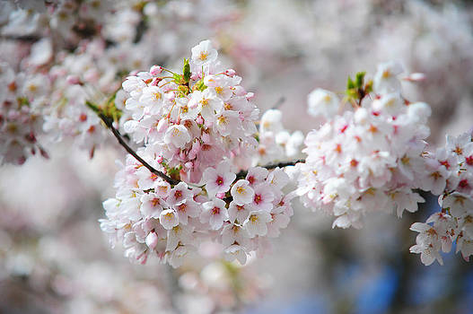 Jenny Rainbow - Joy of Spring 1. Pink Spring in Amsterdam