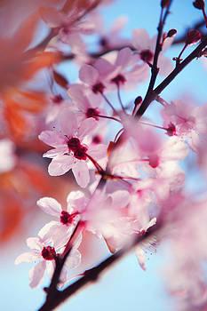 Jenny Rainbow - Joy of Spring. Pink Spring in Amsterdam