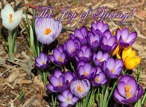 Rosanne Jordan - Joyful Spring Crocus