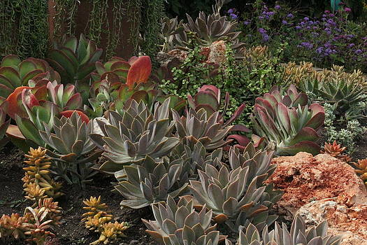 Rosanne Jordan - Juicy Succulents